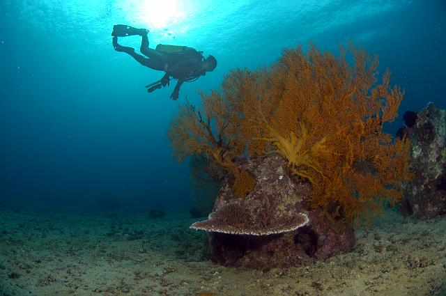 Reef ball coral muelle buzo