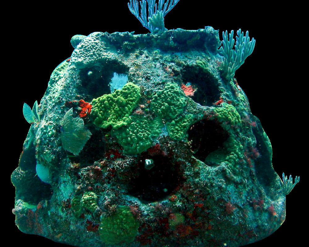 reef ball
